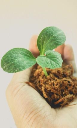 zielona roslina na dloni